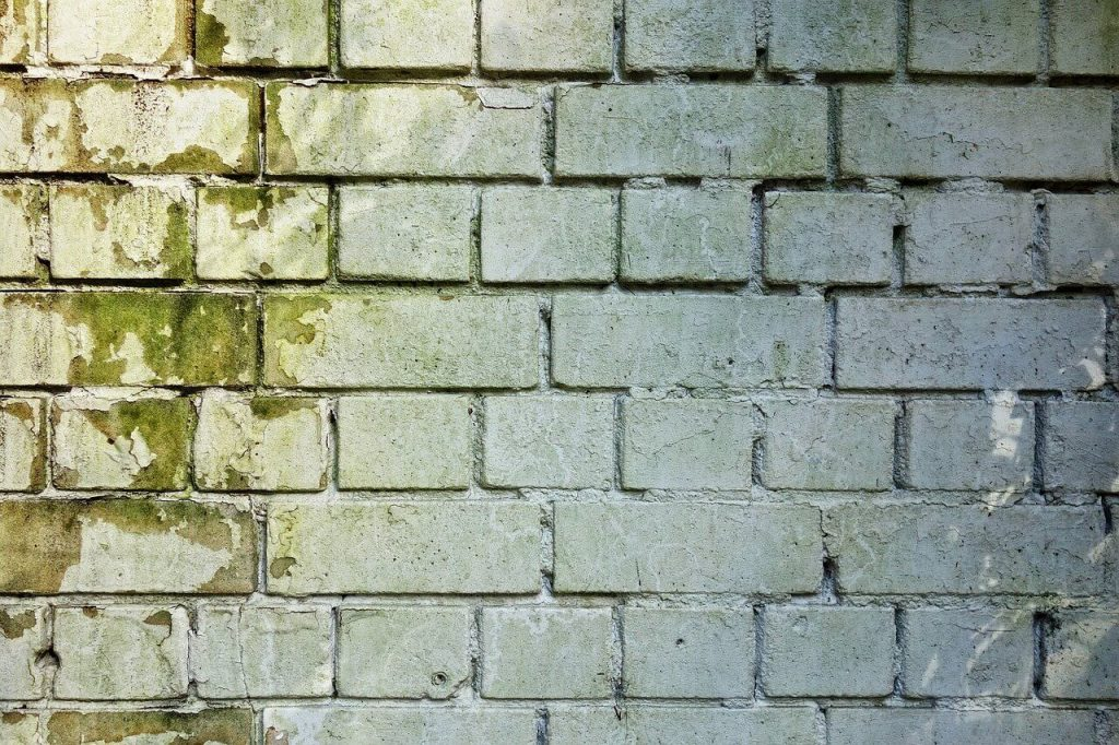 pared cubierta moho